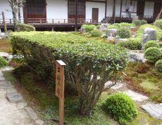 金剛寺の庭園② こんな風に楽しもう!! 【河内長野 こんなオモロイとこ!!】