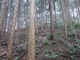 奥河内 石仏城 探検記(その5)