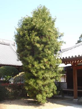 kkouyamaki