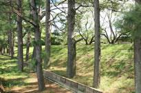 広川町 堤防 松並木