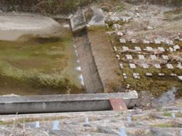 奥河内 寺池導水路 探検記②導水路の遡行 本当にあげ口にたどり着けた