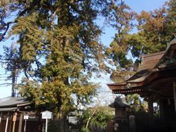 榧の木 長野神社
